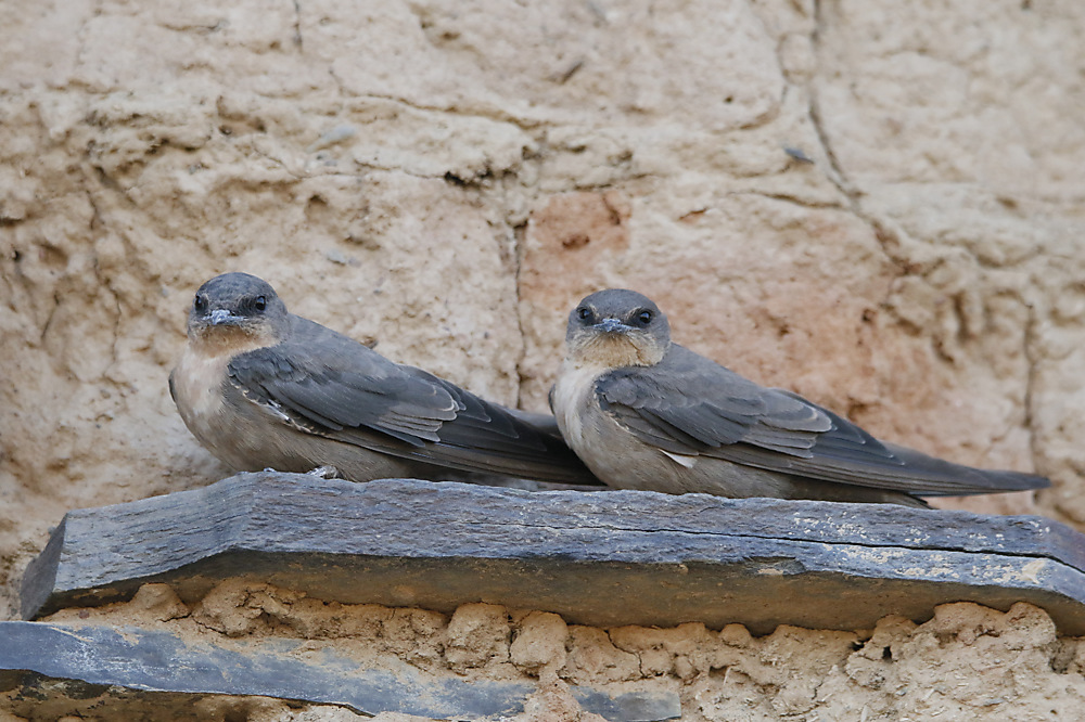 photoblog image Rock martins